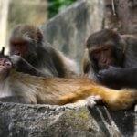 Nepal_2012 734